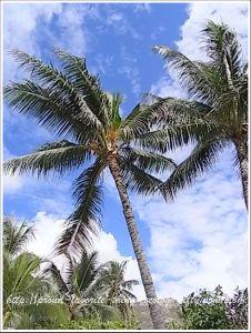 Lanikai_beach9